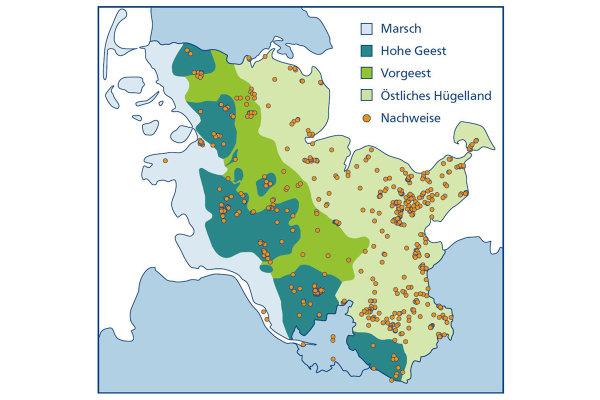 Flatterulmen In Schleswig Holstein Von Der Auenrenaturierung Bis