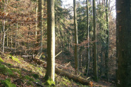 Waldbestand am Hang