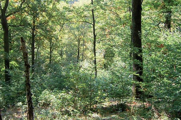 Eichenwälder Oma gibt Blowjob