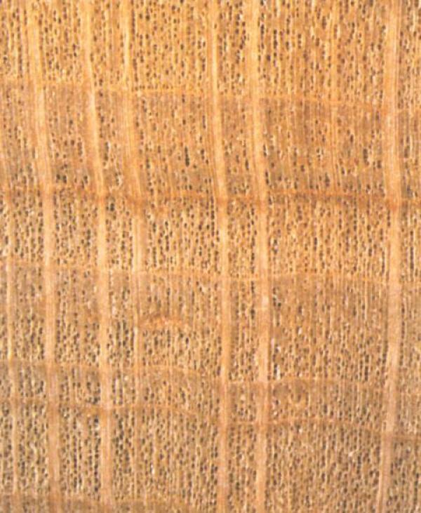 Das Holz Der Schwarzerle Eigenschaften Und Verwendung Lwf Wissen 42