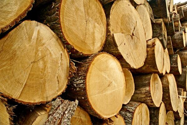 Das Holz Der Eiche Eigenschaften Und Verwendung Lwf Wissen 75