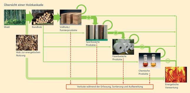 Grafik Zur Holzkaskade: Rohholz Aus Dem Wald Wird Zunächst Zu Verschiedenen  Holzpordukten (Vollholz